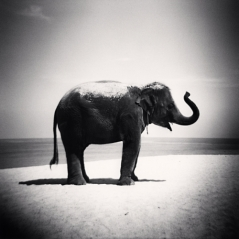 Michael_Kenna_Elephant