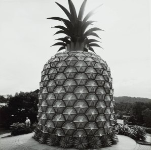 Pam, Max_The Big Pineapple